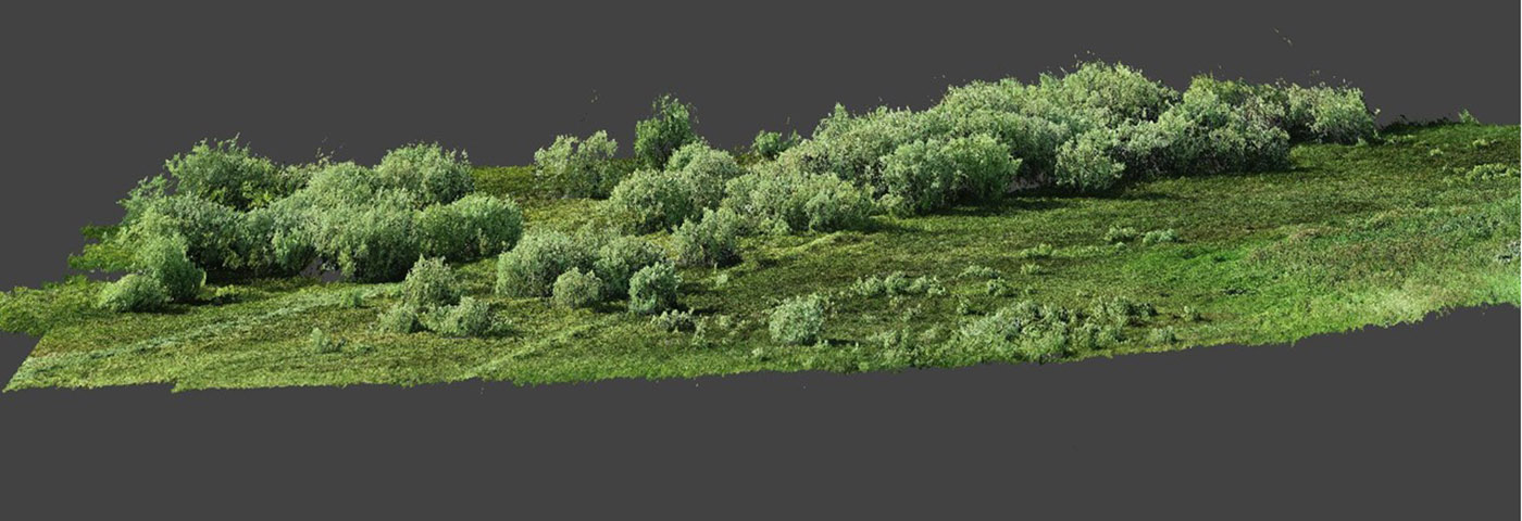 Vegetation point cloud